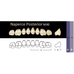 Naperce Posterior, (A3,5-M30, боковые верхние) (8 шт.) - зубы акриловые двухслойные. Yamahachi